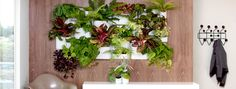 Urbio - Living Wall