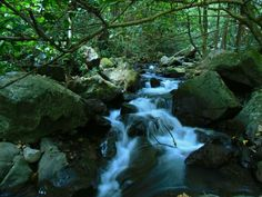 Fresh water on the slopes of Mount Ungaran