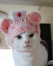 Smiles are free funny cats, cat hat и cats, kittens. Cute Cats, Funny Cats, Nurse Cat, Cat Dressed Up, Cat Sweaters, Cat Accessories, Cat Hat, Pet Costumes, Cat Crafts