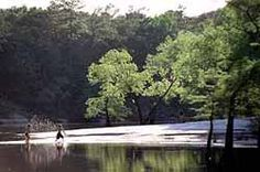 Village Creek state park in Lumberton, Texas. 1090 acres of forest, creek, hiking, fishing, camping, nature...in my hometown <3