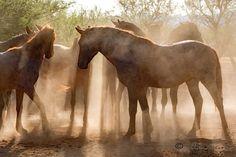 Salt River Wild Horses Advocates by Dixie Wilson