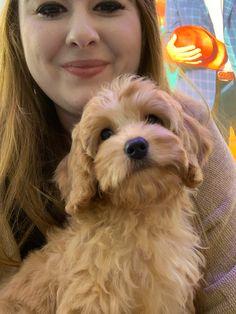 Cavapoo Breeders, Cavachon Puppies, Cockapoo Puppies For Sale, Cute Dogs And Puppies, Fur Babies, Georgia, Wildlife, Travel, Animals