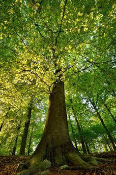 #baum #natur #landschaft #fotografie #tree #forest #sunlight #sonne