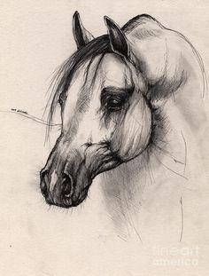 Arabian Horse Drawing  - Arabian Horse Fine Art Print