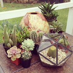 Terrariums&Cacti.