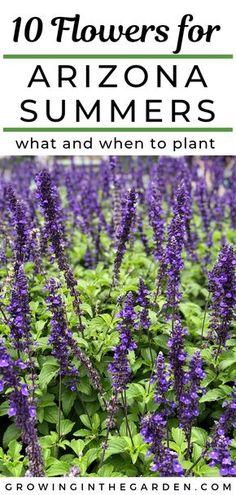 Desert Backyard, Backyard Plants, Outdoor Plants, Outdoor Gardens, Desert Flowers, Desert Plants, Summer Flowers, Cool Flowers, Tropical Flowers