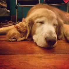 …but this cute duo totally proved everyone wrong! | This Golden Retriever And Rescued Kitten Will Sweeten Up Your Instagram