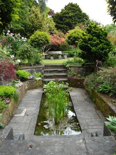 sunken garden pond . new zealand