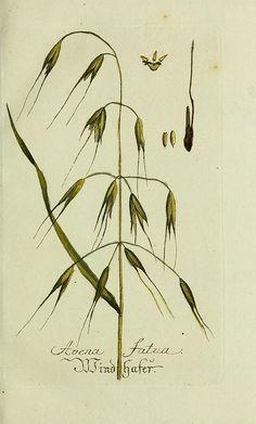 n38_w1150 | Plantarum indigenarum et exoticarum icones ad vi… | Flickr