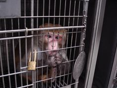 Urge AirBridgeCargo to stop shipping monkeys from China to the U.S. to be tortured in laboratories.