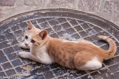 Poes op putdeksel in Chania