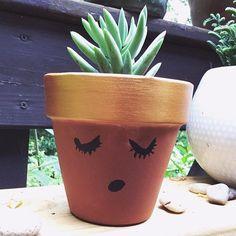 A girl named Harry. Harry Butterfield. Happy #succulentsunday! . . . . #succulents #succulentlover #succulentsofinstagram #succulove #succulentjunkie #succulentobsession #succulentlife #succuholic #succulentaddict #canvascorpbrandscorpbrands #highimpactp