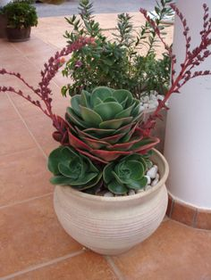 Echeveria Secunda Crassulaceae C Is Buona Giornata X Mon Mar 2015 Succulents In Containers, Cacti And Succulents, Container Plants, Planting Succulents, Cactus Plants, Container Gardening, Garden Plants, Planting Flowers, House Plants