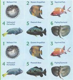Aquarium fish names in alphabetical order for Pet fish names