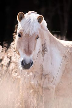 Most Beautiful Animals, Beautiful Horses, Equine Photography, Animal Photography, Fjord Horse, Andalusian Horse, Friesian Horse, Arabian Horses, Majestic Horse