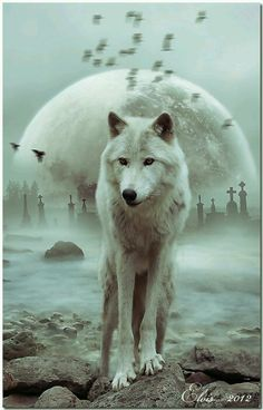 <3    …SAVE THE WOLVES