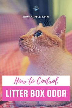 Cat Litter Box Enclosure, Hiding Cat Litter Box, Litter Box Smell, Cleaning Litter Box, Cat Info, Cat Care Tips, Cat Dad, Cat Names, Cat Lovers