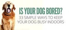 Is your dog bored? Looking for some easy ways to keep your dog busy indoors? Check out this list of 33 simple games and activities you can do today
