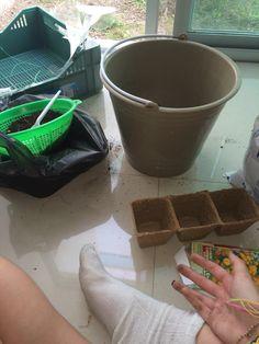 En esas macetas fue en donde colocamos las semilas, y a un lado se puede ver como colamos la tierra para tener mejor higiene en la germinación - BeckySerrano 14/06/15