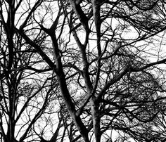 The Tree Lace ~ Black and White fabric by peacoquettedesigns on Spoonflower - custom fabric ~ by PeacoquetteDesigns on Spoonflower ~ bespoke fabric, wallpaper, wall decals & gift wrap ~ Join PD  ~ https://www.facebook.com/PeacoquetteDesigns