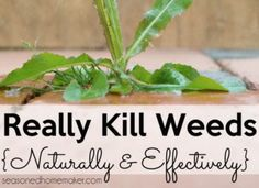Really Kill Weeds Naturally and Effectively