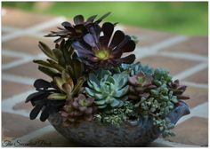 Learn how to design this 'floral-style' succulent container arrangement by www.thesucculentperch.com on Saturday, June 14, 2014