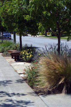 sustainable low water garden design in san jose california taproot garden design