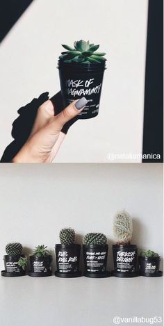 Looking to grow your own succulent forest? You can reuse Lush black pots to grow a cute cati family and ensure containers have yet again another use. If a green thumb isn't quite your forte, all of our Lush black pots can be recycled in shop. Bring back 5 pots for a free fresh face mask. #lushcosmetics #lush #zerowaste #refuse #reuse #recycle #garden #succulent