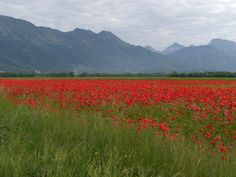 Aviano -- there must be a nice narrow road for cycling, right?