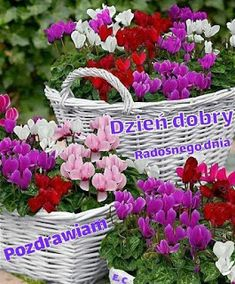 Discover recipes, home ideas, style inspiration and other ideas to try. Floral Wreath, Plants, Album, Humor, Facebook, Google, Messages, Cats, Polish