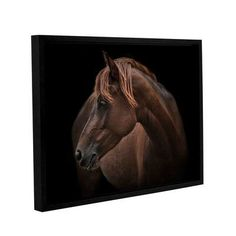 "Alcott Hill Chincoteague Pony Framed Photographic Print on Wrapped Canvas Size: 24"" H x 32"" W x 2"" D"