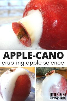 Apple Science with an erupting APPLE- CANO baking soda vinegar experiment