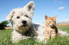 Mascotas sin plagas