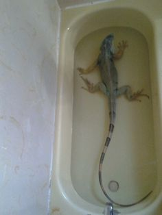 Ummm I think you need to buy me a bigger tub, pleaseee