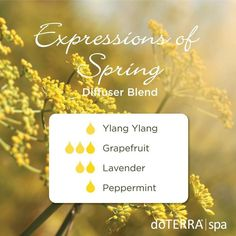 Expressions of spring - ylang ylang, grapefruit, lavender and peppermint