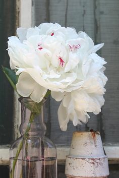 white peonies from Esther's garden..the sweetest gift she could have given to me...