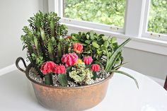 We repurposed this copper jelly pot and created a succulent garden centerpiece for a dining room table! Succulent Centerpieces, Succulent Arrangements, Succulent Pots, Planting Succulents, Indoor Succulents, Centerpiece Wedding, Table Centerpieces, Table Decorations, Air Plants