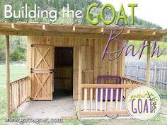 Mini Goats, Baby Goats, Goat Shed, Goat Shelter, Sheep Shelter, Barn Layout, Goat Barn, Dwarf Goats, Raising Goats