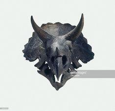 Image result for triceratops skull