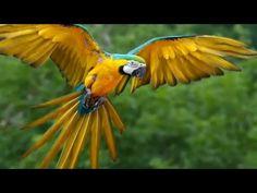 Nicaragua tiene gran variedad de aves migratorias y residentes