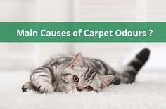 Jena's Carpet Cleaning is the best bad odours removal for carpet cleaning service provider melbourne.