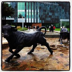 You aren't a true USF Student until you've ridden on that bulls back!