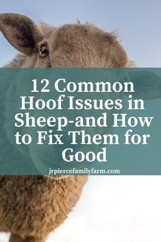 How to help your injured animal Raising Farm Animals, Raising Chickens, Farm Gardens, Veggie Gardens, Future Farms, Sheep Farm, Living Off The Land, Goat Farming, Chickens Backyard