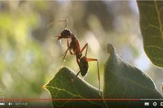 Vídeos sobre los invertebrasos