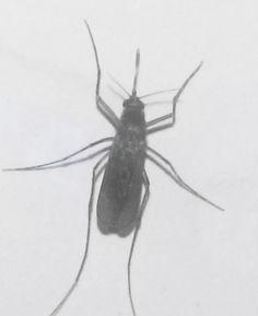 Malaria Treatment मच्छर से मलेरिया इलाज