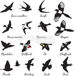 Barn swallow, swift, house martin, sparrow, magpie, flycatcher, bullfinch, tit…