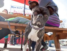 You and your pooch can enjoy a bite to eat at one of these dog friendly restaurants in Portland, Ore.