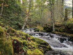 Jones Creek near LoLo Pass/Mt Hood Oregon [OC] (4048x3036)