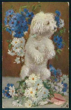 TUCK art Poodle dog doing trick and daisy floweroriginal old c1910s postcard