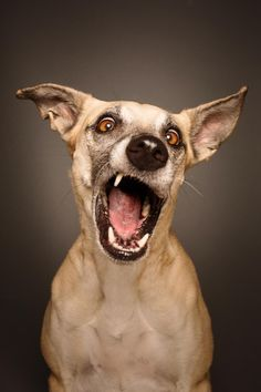 (I do like her style!)  Elke Vogelsang on 500px The Secrets To Taking Awesome Dog Portraits